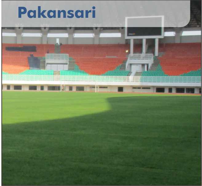 rumput stadion pakansari cibinong